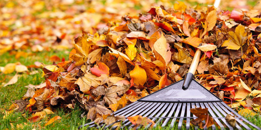 Spruce Up Your Lawn